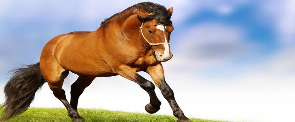 banner_horse_940x390