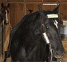 horsereflect1tb