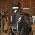 horsereflect_tb (Duplicate)