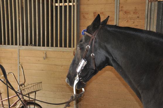 Horse Safety Reflector