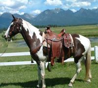 Western & Horses